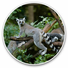 2 x Vinyl Stickers 7.5cm - Cool Tailed Lemur Madagascar Cool Gift #12667