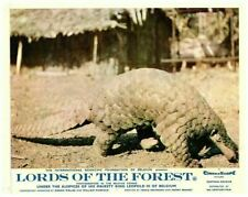 Lords of the Forest Original Lobby Card Belgian Congo Leopold Iii Pangolin 1958