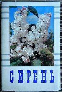 Lilacs 1973 Vintage Photo Postcards Sets of 15 pcs