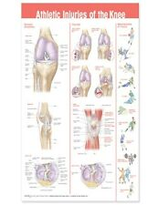 ATHLETIC INJURIES OF THE KNEE (LAMINATED) POSTER (66x51cm) ANATOMICAL CHART NEW