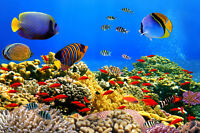 VLIES Fototapete-KORALLEN KOLONI-(341V)-350x260cm-7Bahnen 50x260-Unterwasserwelt