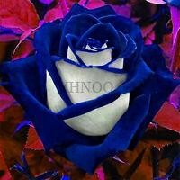 Loss Blue Pink Seeds Plants Rose Bonsai Flower For Rare Garden Home 200pcs/bag