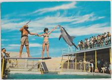 Australia QUEENSLAND Porpoise feeding COOLANGATTA TWEED HEADS postcard c1960s