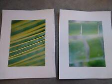 2 x Bilder Fotos Drucke Wanddeko Bambus Palme grün 30 x 24 innen 15 x 21