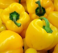 ☺75 graines de poivron jaune california wonder / sweetpepper