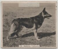 Alsatian German Shepherd 1930s Champion  Dog Breed Canine Pet Ad Trade Card