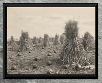 Charming ... Early 1900's Corn & Pumpkin Harvest ... Antique 5x7 Photo Print
