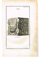 """Moufaucon's """"URNE"""" from """"Antiquity Explained"""" - Copperplate - 1719"""