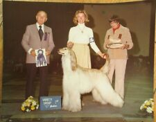 Afghan Hound 1980s Champion Dog Show 8 x10 Photograph / Photo