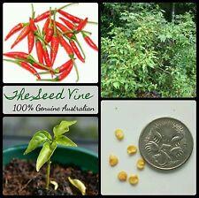 30+ HOT BIRD'S EYE CHILLI SEEDS (Capsicum annum) Fresh Edible Spicy Easy to Grow