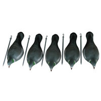 5x Realistic Painting Pigeon Decoys Shell Dove Half Shell Shooting w Stick Pegs