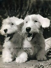 2 Happy Sealyham Terrier Dogs Photographed By Ylla 1945