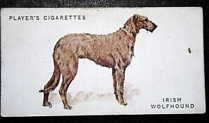 IRISH WOLFHOUND     Superb Original Vintage Colour Card  ## VGC