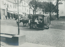 Portugal, Funchal (Madeira), Fiacre à Boeuf  Vintage silver print.  Tirage a