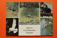 AK Hamburg 1970er Gruss aus Carl Hagenbeck s Tierpark Zoo Vögel Flamingo Pfau ++