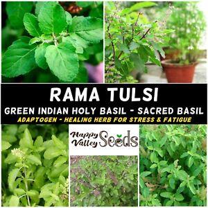 RAMA TULSI 50 Seeds GREEN INDIAN HOLY BASIL herb garden STRESS REMEDY herbal tea