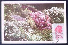 ROMANIA MK 1957 FLORA KARPATEN ALMENRAUSCH MAXIMUMKARTE MAXIMUM CARD MC CM d2875