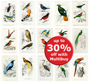 Vintage Birds poster prints A4 A5 A6 wall art home bird decor ornithology school
