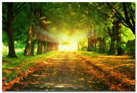Morning Sunbeam Forest Path Nature Art Silk Wall Poster Photo 13x20 24x36 inch