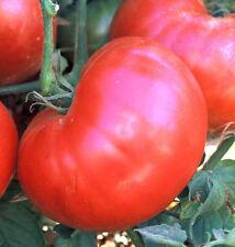 Ponderosa Pink Tomato *Heirloom* Non-GMO (50 Seed's) 2018