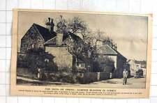 1942 Armond Blossom Decorating Corner Of Ripley Village
