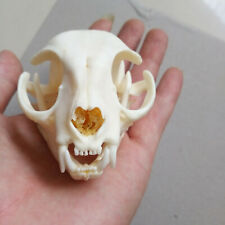 1pcs real Small Animal Skull specimen Collectibles