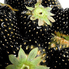 100pcs Rare And Delicious Strawberry Seeds Vegetables Fruit Plant Seed Exotic