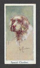 1924 Uk Leo Chambers Dog Art Head Study Moustafa Cigarette Card Clumber Spaniel
