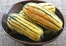 Organic Delicata SQUASH 25+seeds Sweet Buttery NON-GMO long Storage High Yields