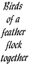 Mounted Rubber Stamps, Bird Stamps, Bird Quotes, Friendship Sayings & Quotes