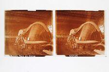 Musée Histoire naturelle baleine Paris Plaque stéréo Vintage Positif 6x13cm