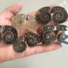 1 Pair Half Cut Natural Ammonite Shell Jurrassic Fossil Specimen Madagascar