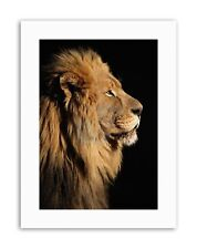 BIG MALE AFRICAN LION Picture Portrait Canvas art Prints