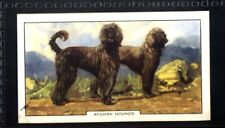 Gallaher Dogs 2nd Series 1938 - Afghan Hound No. 20
