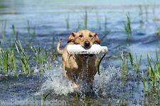 "Avery Greenhead Gear Sporting Dog 3"" White Hexabumper Hexa Bumper Dummy Bird"