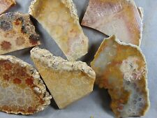 10 indonesian coral agate slabs