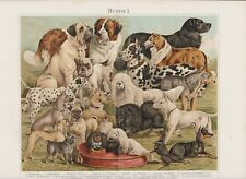 ca1890 DOGS DOG Breeds J.BUNGARTZ Antique Chromolithograph Print