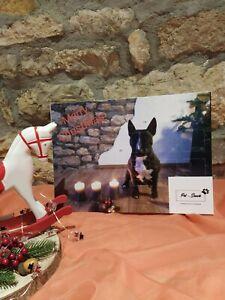 Adventskalender für Hunde, Hundeadventskalender, Hundekekse, Hundeleckerli