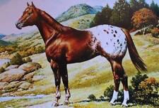 Appaloosa horse Vintage Art