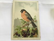 Chromo - Oiseau : Bouvreuil
