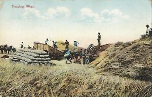 Threshing Wheat Midwest USA 1909 Rieder Postcard