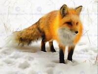 PHOTO PAINTING RED FOX WINTER SNOW CUTE ART PRINT POSTER HP1855