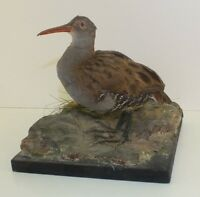 Antique Taxidermy Bird On a Stand.