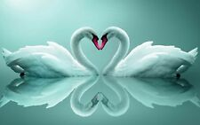 "Teal Swans in Love Heart Shape 20""x30"" Reflecting Canvas Picture Wall Art Prints"