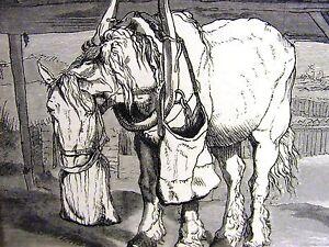 Edwin Landseer OLD HORSE EATING HAY OUT of BAG 1870 Antique Art Print Matted
