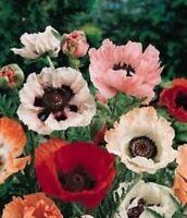 Poppy-Pizzicato Mix- 500 Seeds- BOGO 50% off SALE