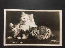 Antique REAL PHOTO POSTCARD c1920-45 Greetings Kittens Cats Putnam RPPC (20642)