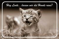 Kleine Baby Katze Blechschild Schild gewölbt Metal Tin Sign 20 x 30 cm CC0047