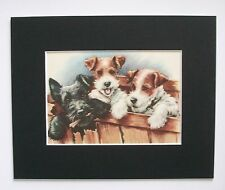 Fox Scottish Terrier Dogs Print Winifred Martin Boxed In Bookplate 1950s Matted