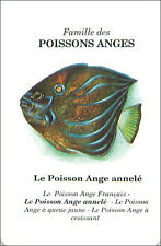 PLAYING CARD CARTE A JOUER angelfish Pomacanthus annularis Poisson ange annelé